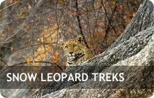 Snow Leopard Treking in Ladakh