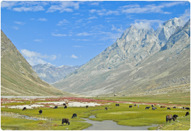Zanskar Dream Trekking Tour